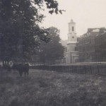 Old St Thomas' from the Common, note the grazing cow